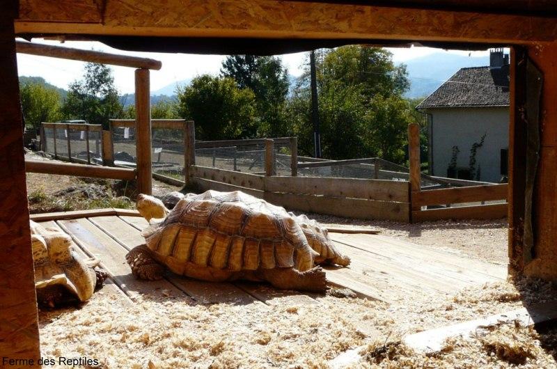 eco vivarium exposition d 39 animaux vivants la ferme des reptiles. Black Bedroom Furniture Sets. Home Design Ideas